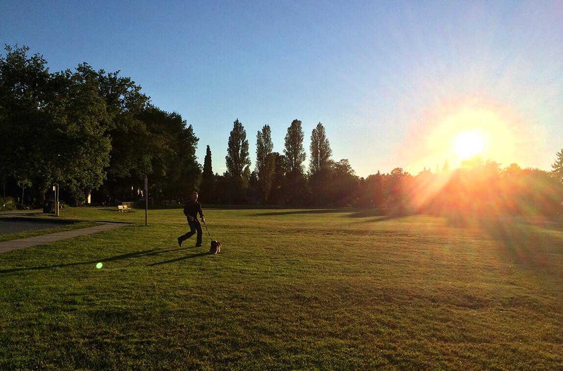 Vancouver's Best Dog Parks